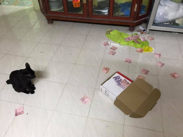 Facebook user thanks cat for unearthing husband's hidden treasure | Samui Times
