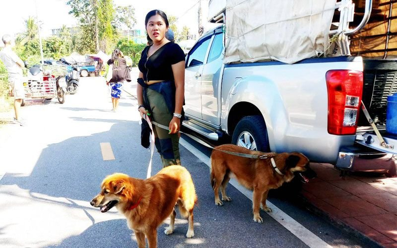 Hua Hin: Swiss pensioner's wife finds him dead in car with their dogs | Samui Times
