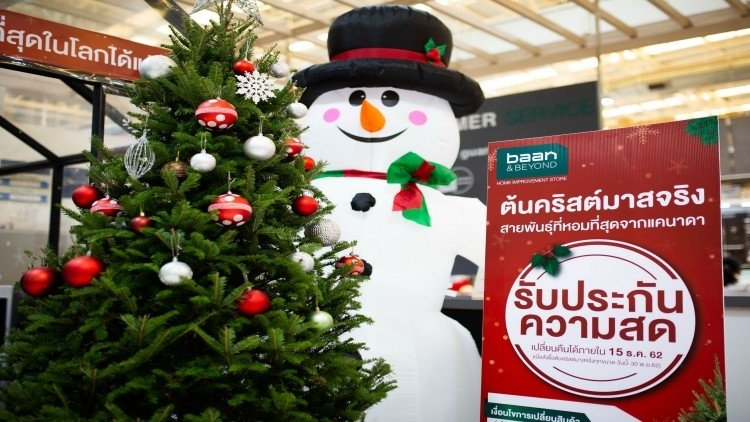 Real Christmas trees being snapped up at Baan & Beyond, Thai Watsadu | News by Samui Times