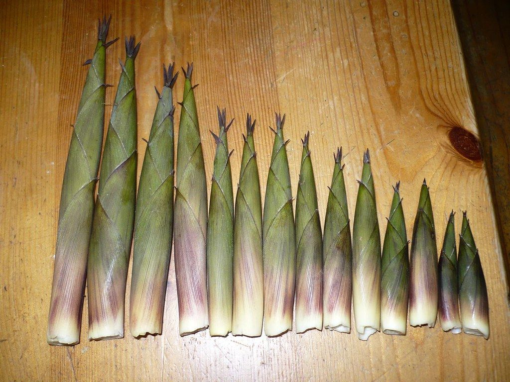 Bamboo shoots | apparently they're edible, not sure how you'… | Flickr